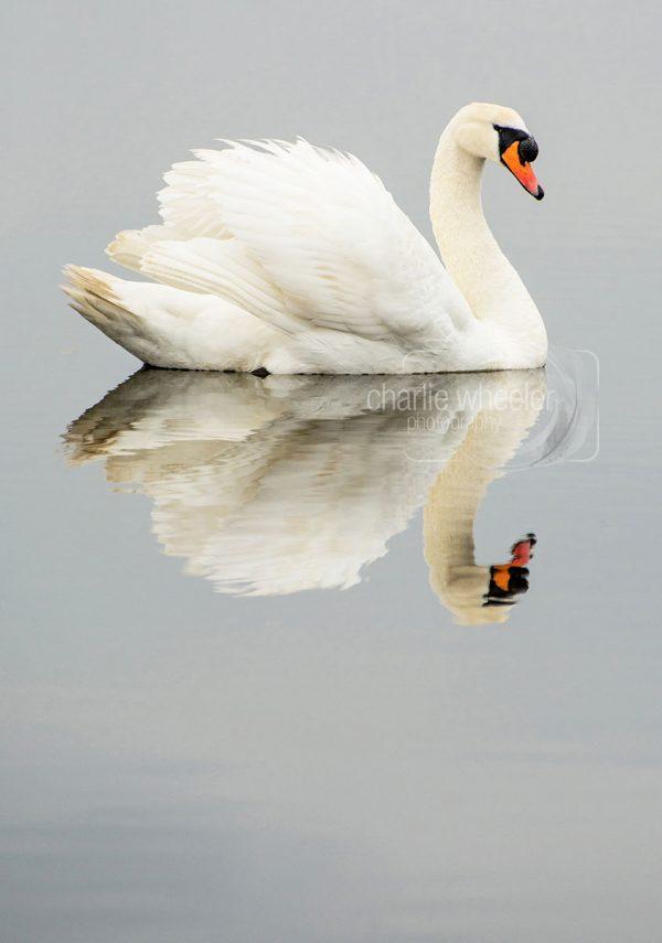 Cob Reflection