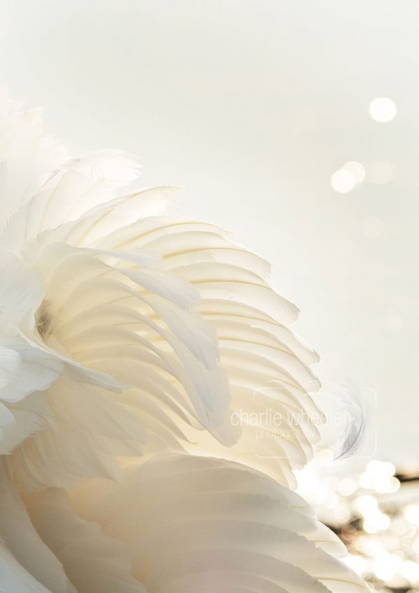 Fanned Feather Detail