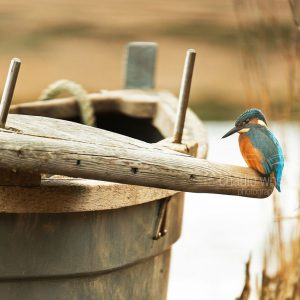 Kingfisher On Boat